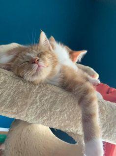 Daisy (kitten) 2