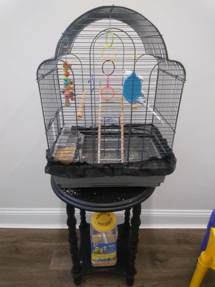 Parakeet (No Name) 1