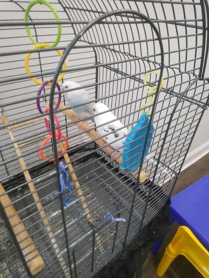 Parakeet (No Name) 2