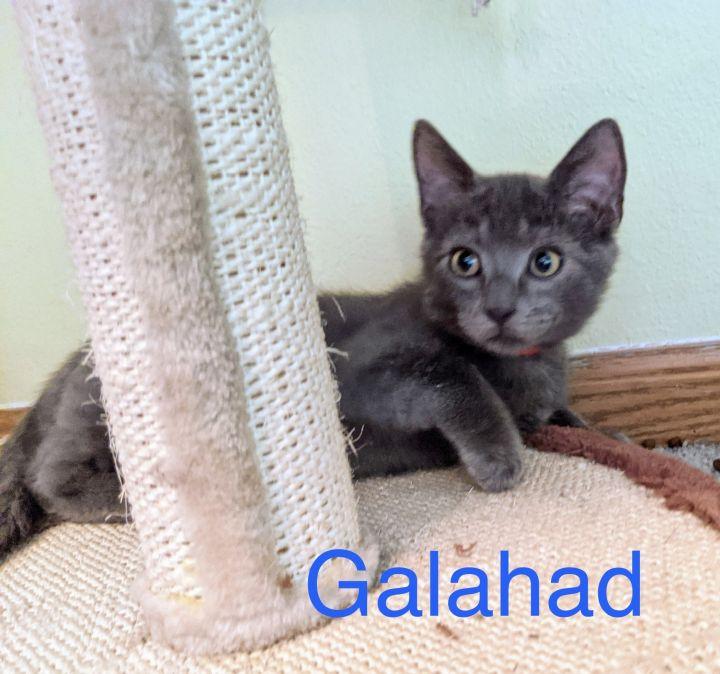 Galahad 1