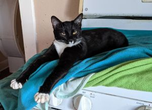 Baby Mack is playful loves to nibble on your handfingers and loves yummy treats please visit lori