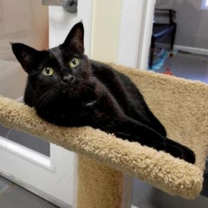 Stewart is a two year old male cat He is a big love bug with endless affection