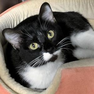Hi my name is Ingrid Im a very sweet young cat who loves to make biscuits and give my friends