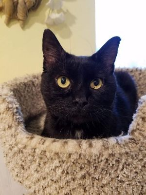 My name is Fritts I am a three-year-old male hunk I used to do the stray cat strut and well
