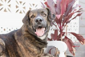 Meet Max Max is a gorgeous Shepherd mix who is about 1-2 years old and is full grown at about