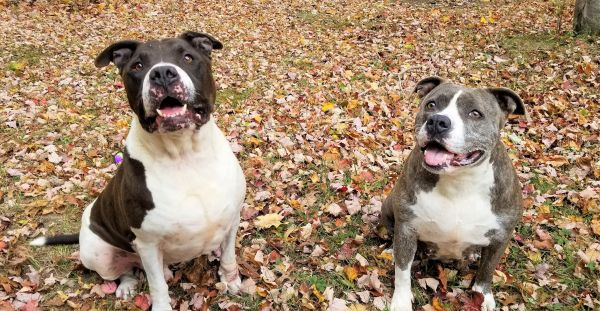 Duchess & Ziggy