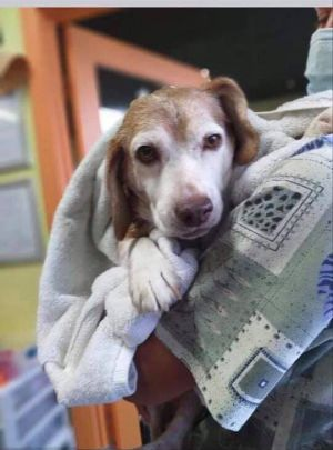 9 year old Tracker is ready to find his forever home He was found abandoned in Florida all alone a