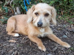 Email for a pre adopt ap Ginny and her buddy Joe see separate post came into our SACR on 106