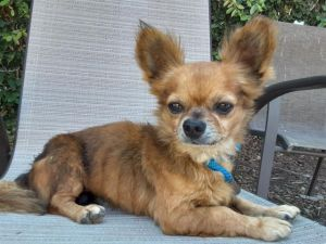 Email for a pre adopt ap Joey and his buddy Ginny see separate post are now in SACR rescue today