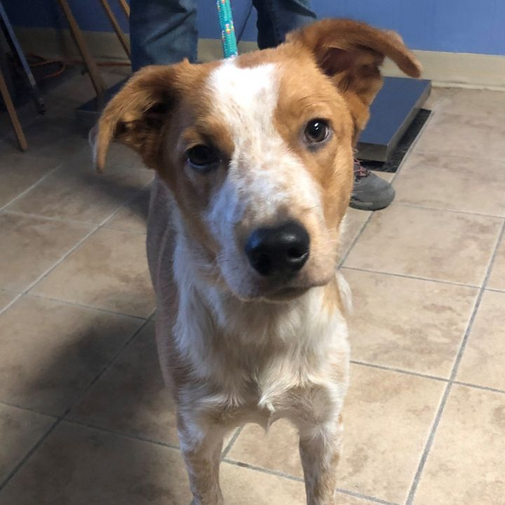 MAX, an adoptable Mixed Breed in Cape Girardeau, MO