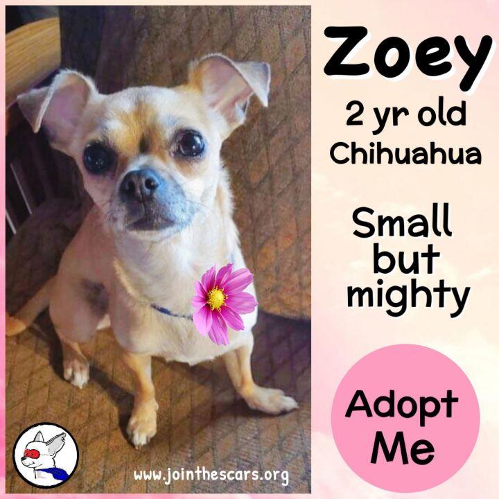 Zoey 1