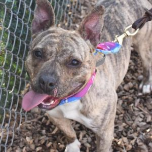 Daffodil is a sweet snuggly girl Every time you kneel down to her level she comes bounding over a