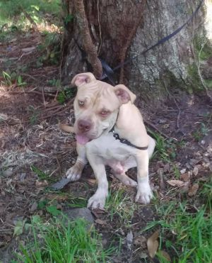 Location New Orleans Louisiana Louie was a owner surrender to Cane Haven Rescue and we wanted to g