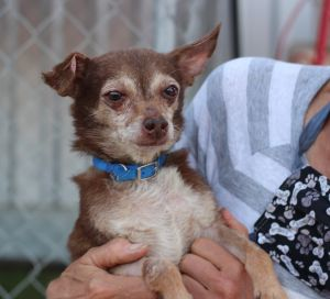 From the San Diego Humane Society little Papa has had some rough years and he looks it Currently be