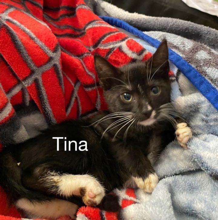 Tina 1