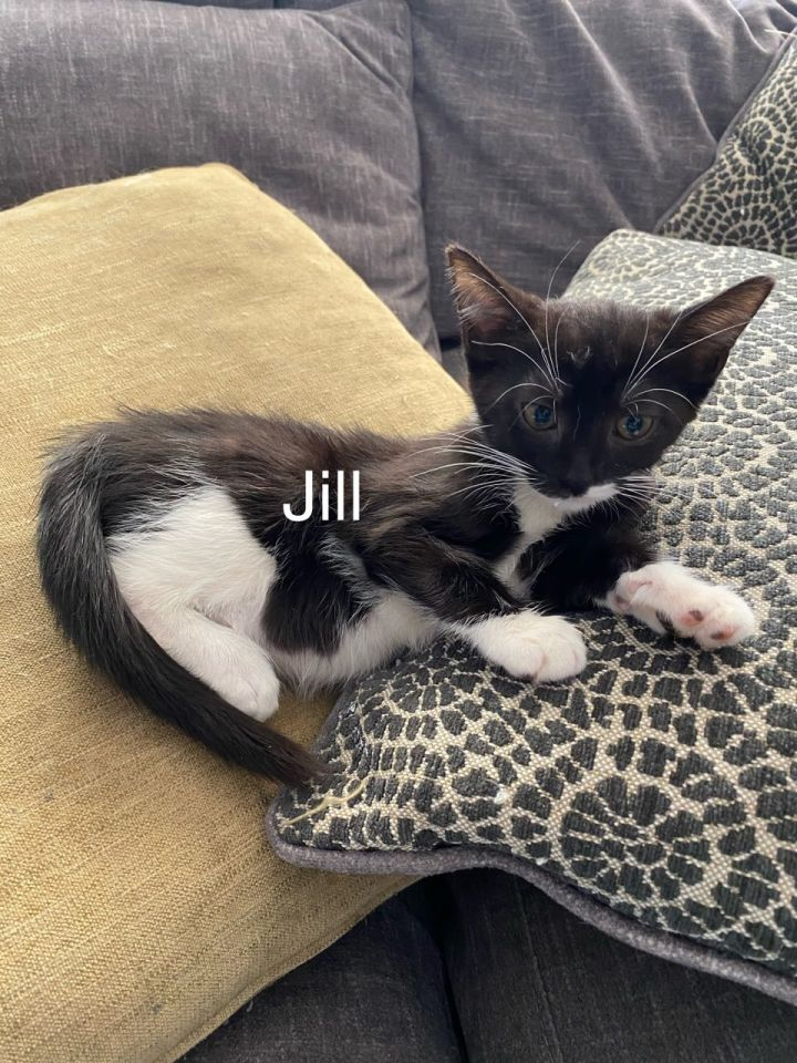 Jill 1