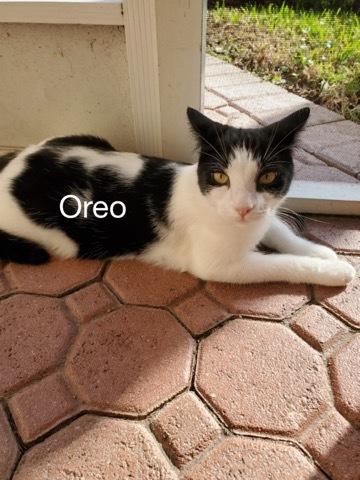 Oreo detail page