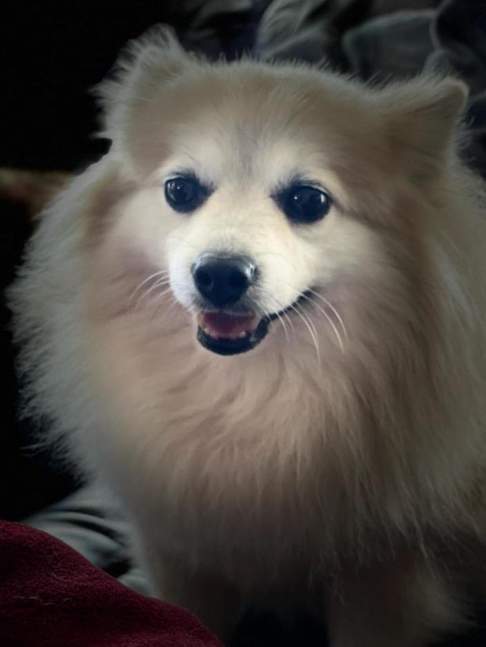 PePe-Adopted!! 5