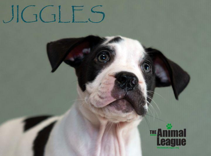 Jiggles 1