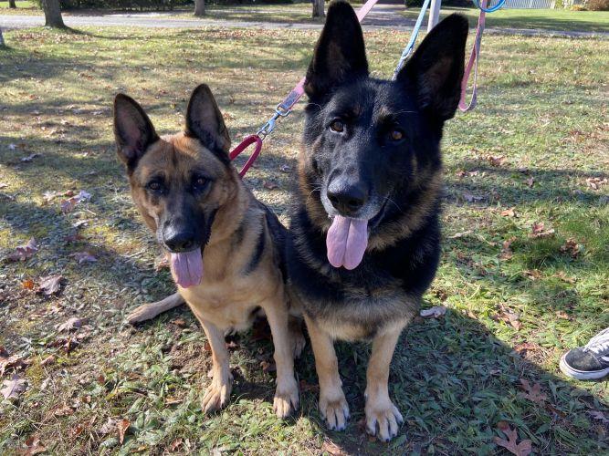 Ghost & Rose Bonded pair