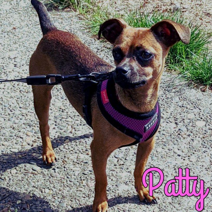 Patty 1