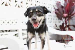 Meet Finny Finny is a gorgeous Dachshund Terrier mix who is about 2 years old and is full grown at