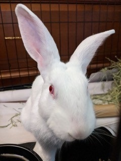 Matlock was tossed outside to survive and fortunately was rescued by a Good Samaritan who brought hi