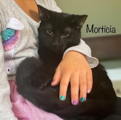 Morticia 6