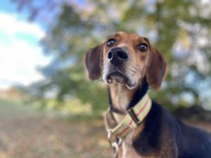 Slinky sweet puppy LOVE Emmie is a young curious affectionate beauty that is definitely some sor