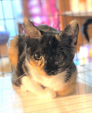 Caroline had a hard start rescued off the streets as a stray with her sister Irene But the two of