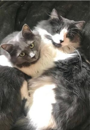 Photo of Momma, Baby, and Smokey