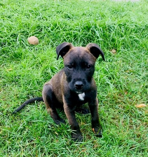 Simon, an adopted Terrier Mix in Rochester, NY