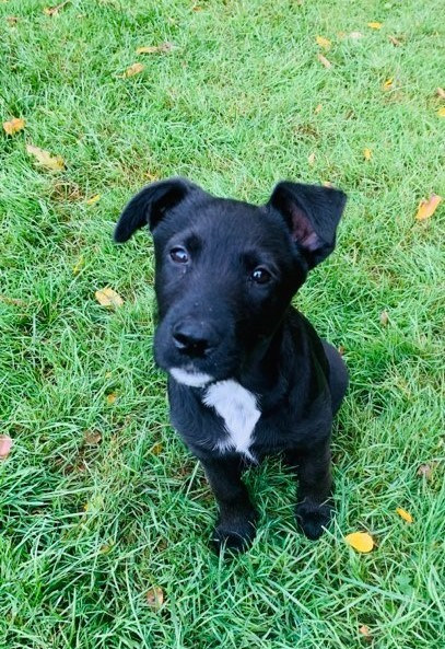 Eva, an adopted Terrier Mix in Rochester, NY