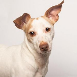 Aaron is a sweet bouncy boy that loves playing with his stuffed toys He knows sit lay come crat