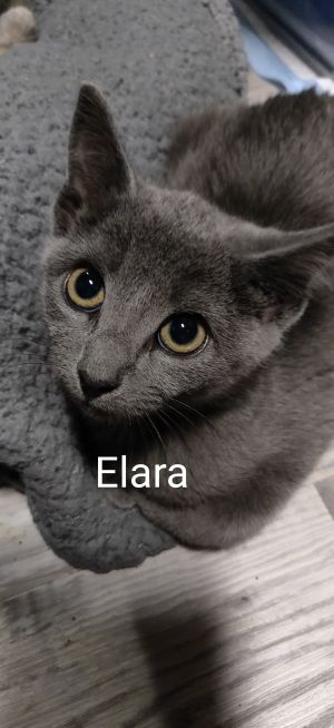 Elara (Group kittens)