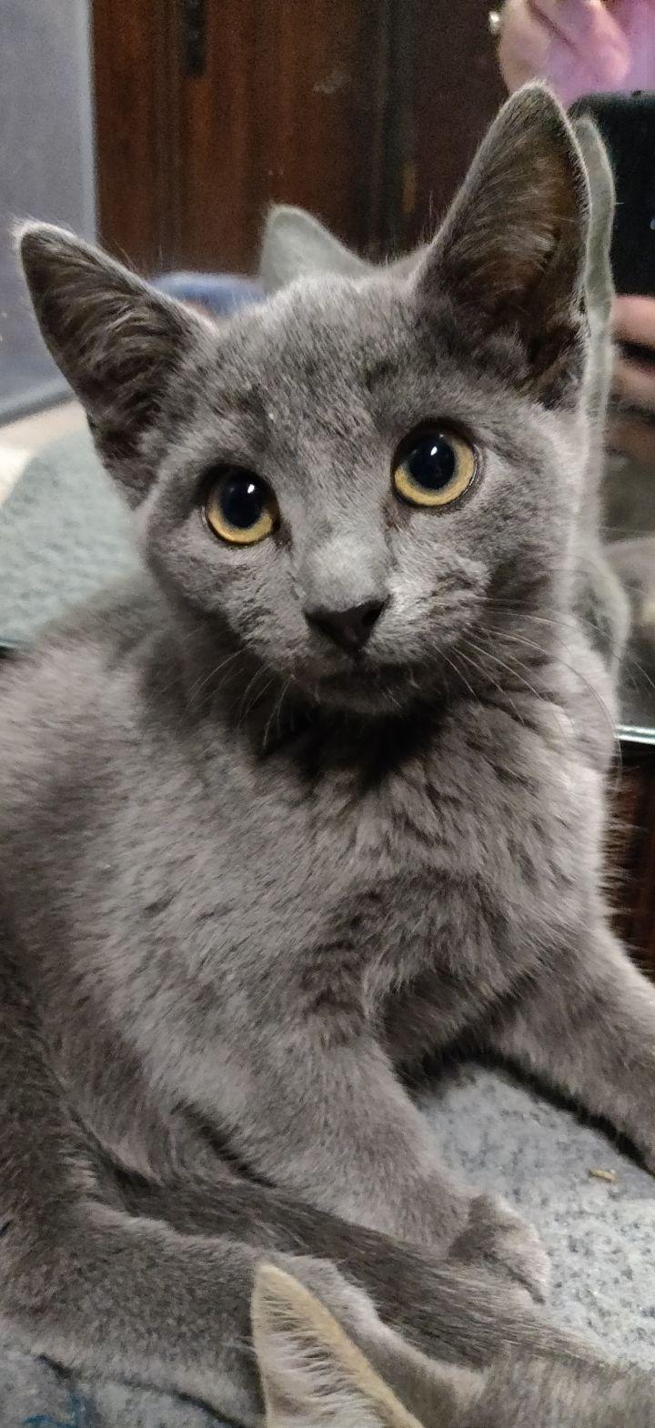 Elara (Group kittens) 3