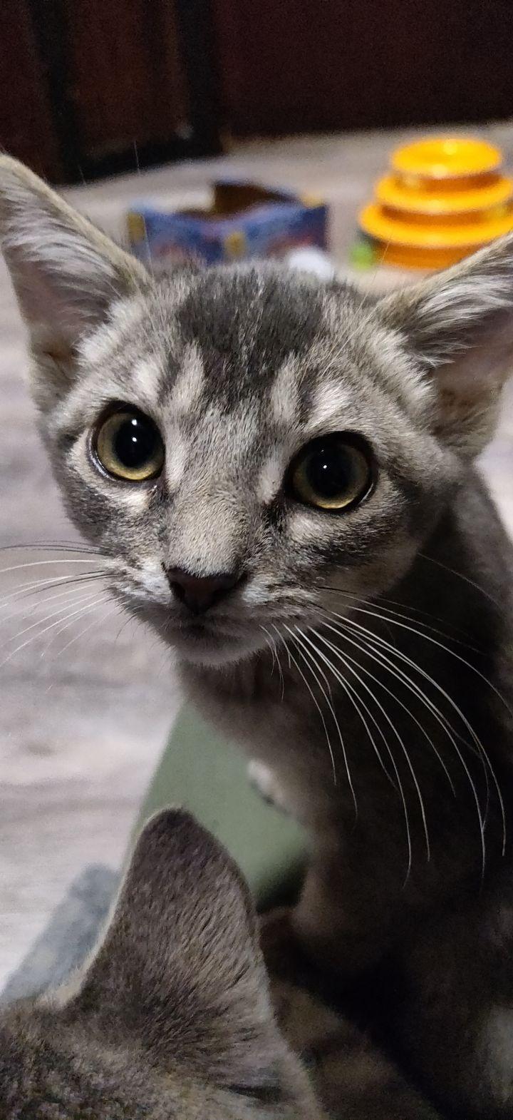 Larissa (Group kittens) 3