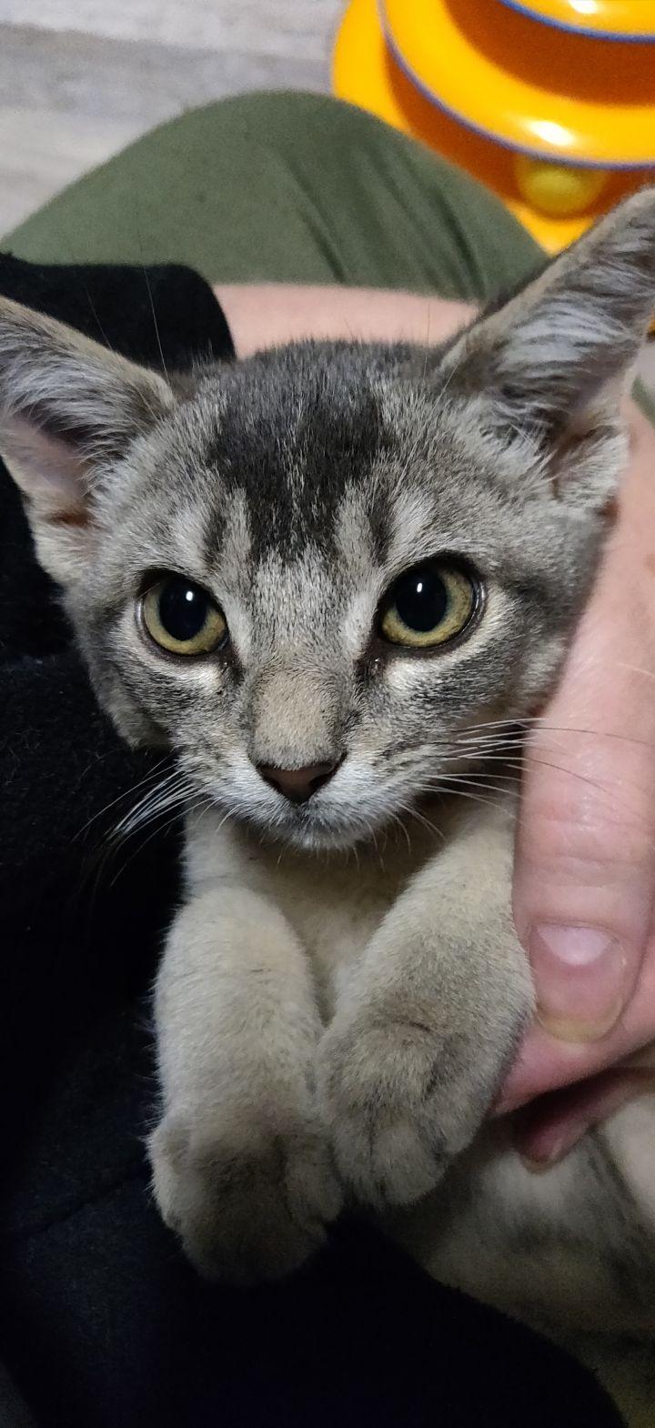 Larissa (Group kittens) 1
