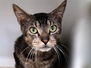 What my friends at ACC say about me I have lived with cats I am a sweet social older gal