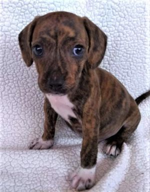 Due to Covid-19 the SPCA is allowing adoptions by appointment only If youd like to discuss an anim