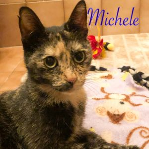Michele is a petite girl and an absolute sweetheart who purrs and makes biscuits with her paws withi