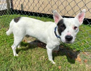 Arizona 42368 is looking for parents that will let him be by their side 247 He is one clingy boy