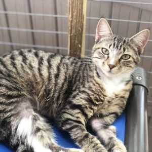 Fennie is 1 year and 4 months old she came into our shelter at 3 months old she has been