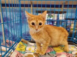 Lysol was found with his three brothers He is very energetic and playful He lo