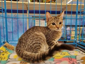 TP was found with his three brothers He is very energetic and playful He loves to follow you ru