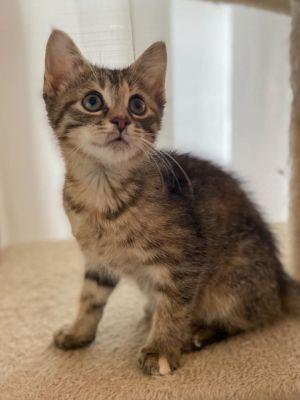 Wendy - Adoption Pending