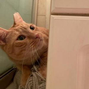 Hi Im Nemo In a new situation I can be quite shy and will find a small space to make