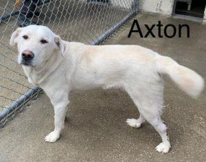 Photo of Axton