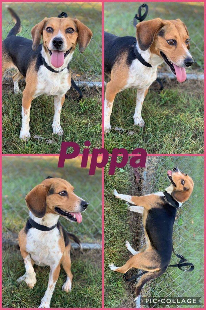 Pippa 3