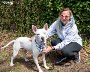 Zero Pit Bull Terrier Dog